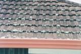 Schimmel oder Mehltau wachsen auf dem Dach